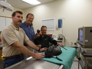 The Loon Endoscopy Team (left to right): Mark Naniot, Wild Instincts, Dr. Dave Theuerkauf, DVM, Northwoods Animal Hospital and Dr. Mike Franks, Gastroenterologist, Marshfield Clinic.